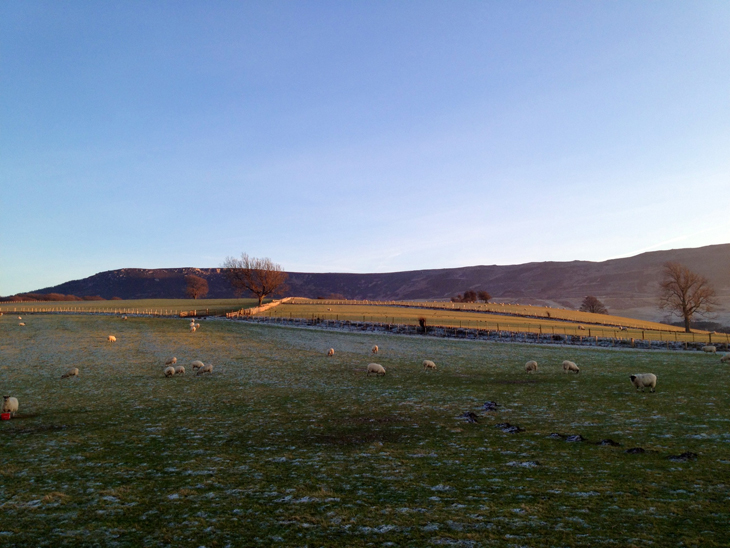Hepple sheep A Frosty Drive Up North...
