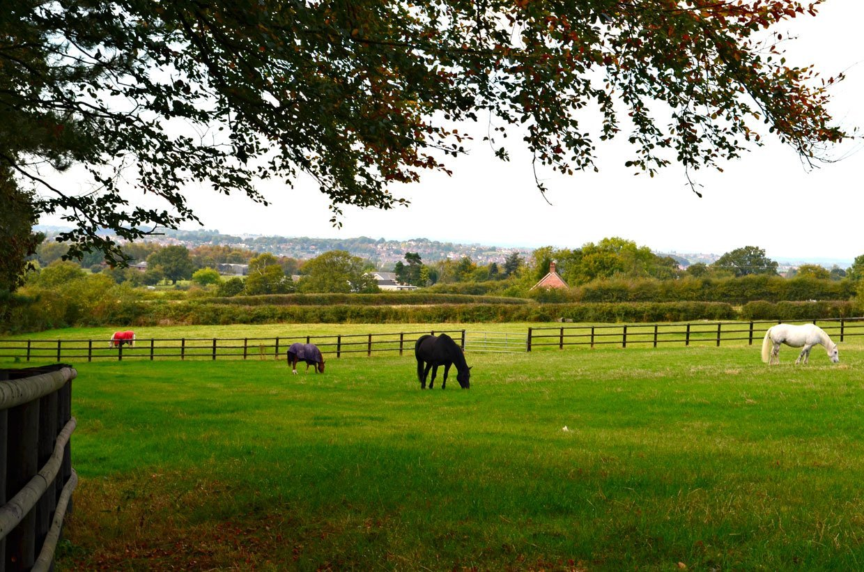 Horse-field-by-the-Woods1 Strelley Village and Hall, a Nottinghamshire Gem