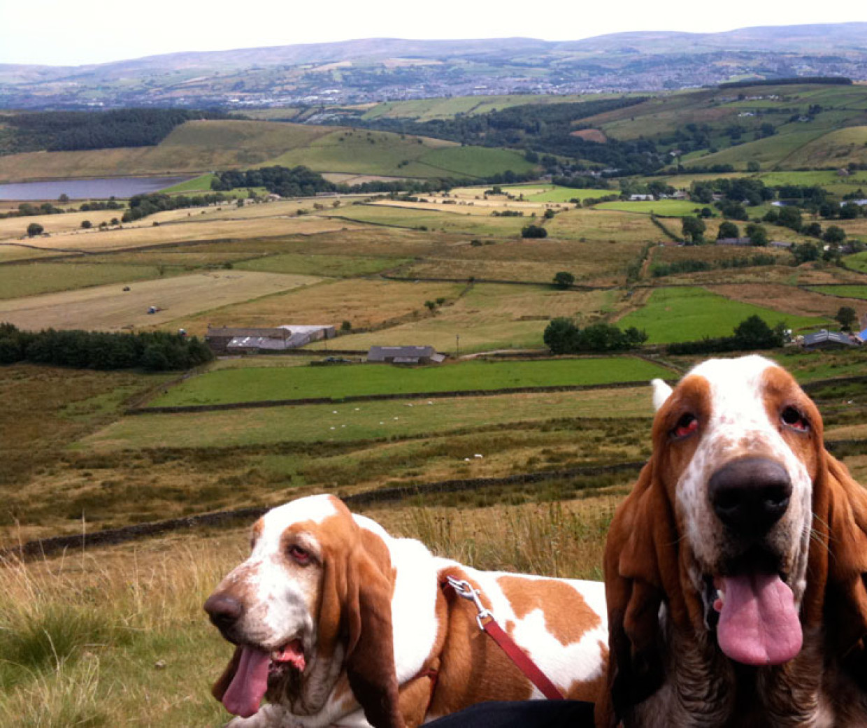 The Hounds And The Hills