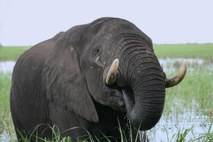 Botswana - The Elephants of Chobe National Park
