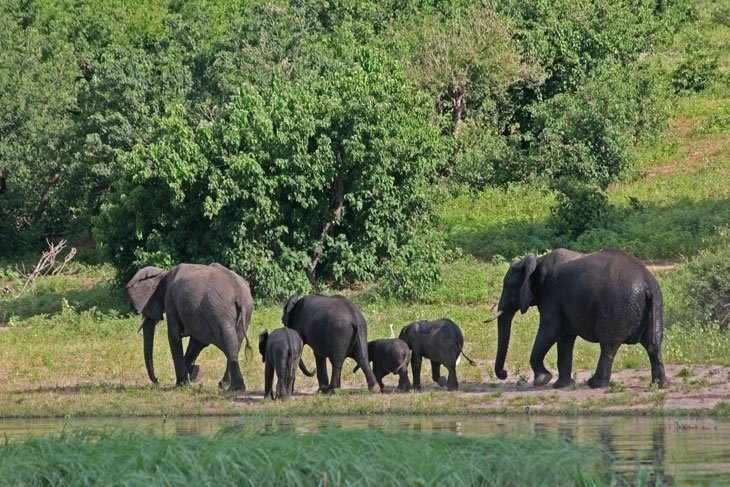 IMG_1385 Botswana – The Elephants of Chobe National Park