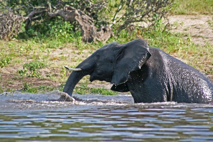 IMG_1390 Botswana – The Elephants of Chobe National Park