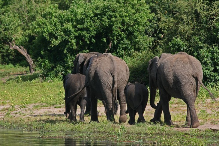 IMG_1407 Botswana – The Elephants of Chobe National Park