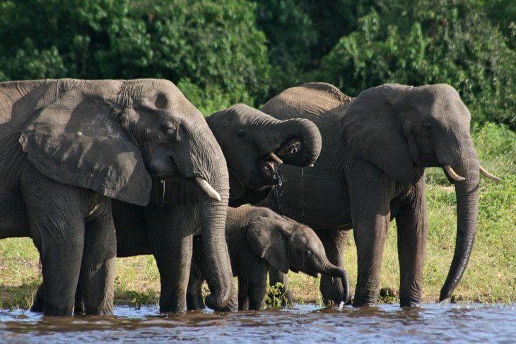 IMG_1452 Botswana – The Elephants of Chobe National Park