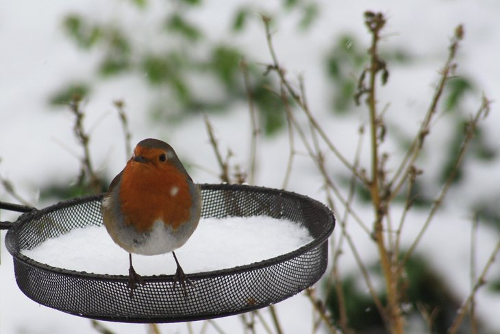 A Morning Coffee Shared With A Robin