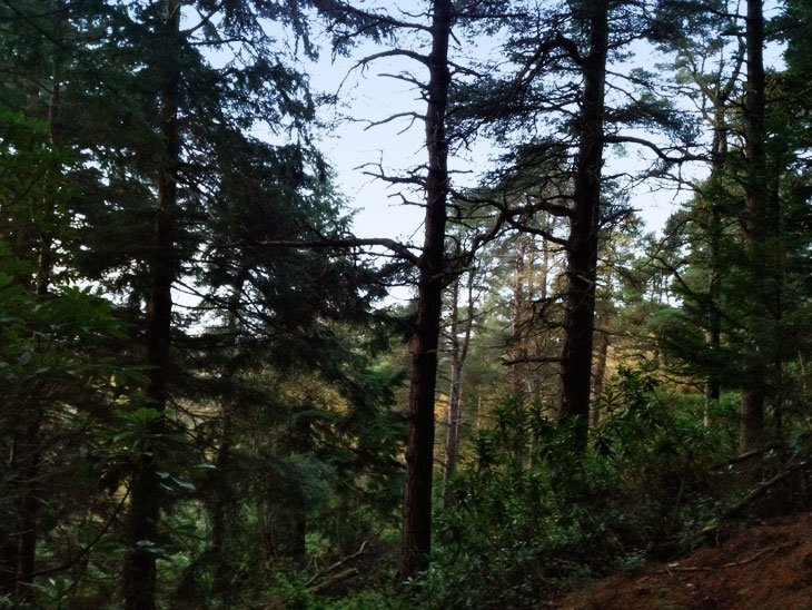 Northumberland – Cragside, Walking In History