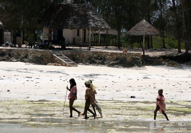 IMG_2379-Zanzibar Zanzibar – Africa's exotic spice island