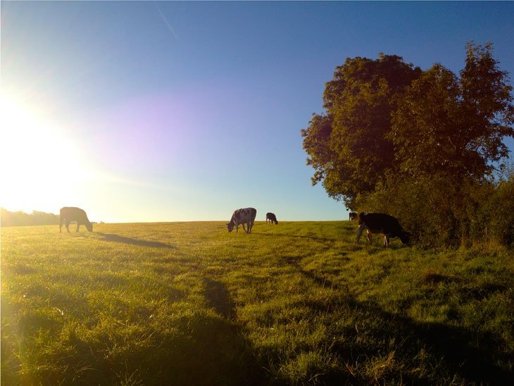 Cows And Bulls: Views With A Moo