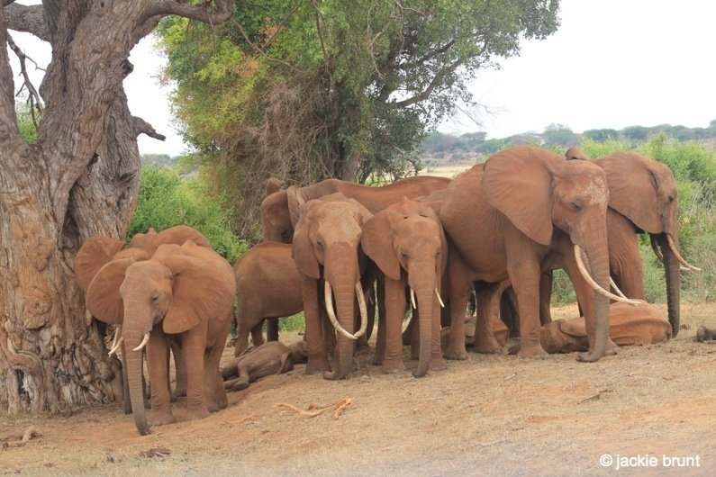 Among Elephants in Kenya