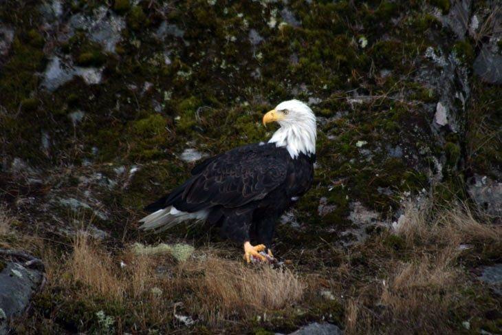 Wildlife And Nature Of British Columbia