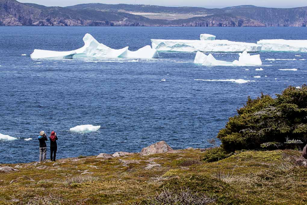 Icebergs-Newfoundland-10 Majestic Giants – Icebergs Around Newfoundland