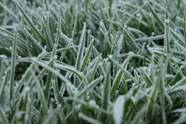 JC_IMG_1152_Grass A Fantastically Frosty Macro Morning