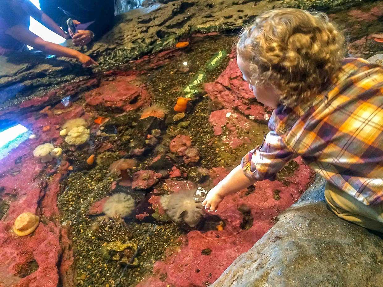 JJ-Aquarium Four Seasons Seattle: A Home Run
