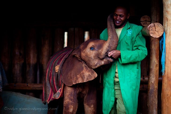 Kenya Elephants Orphans 1 Healing The Hearts Of Kenya's Orphans