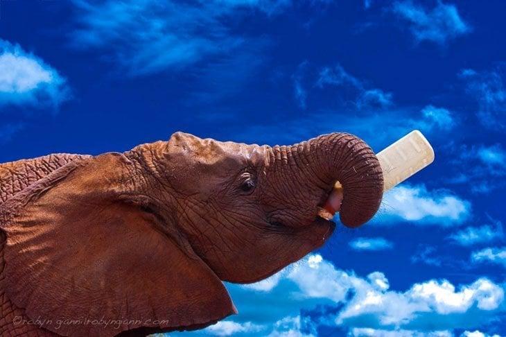 Healing The Hearts Of Kenya's Elephant Orphans