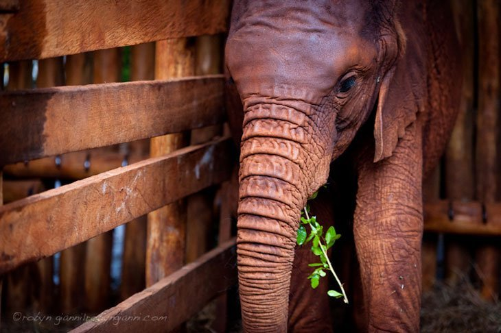 Kenya Elephants Orphans 5 Healing The Hearts Of Kenya's Orphans