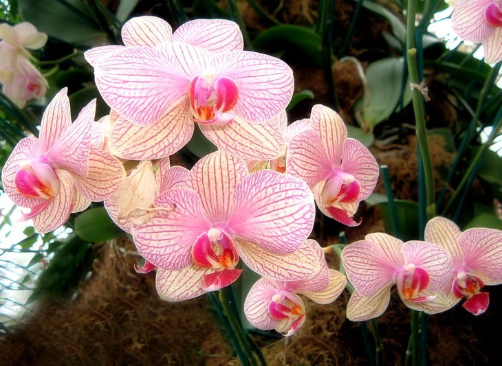 Orchids at Kew Gardens
