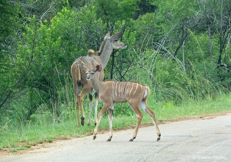 Kudu-at-Pilanesberg-National-Park-Fav.s-south-africa South Africa – Pilanesberg Game Reserve and National Park