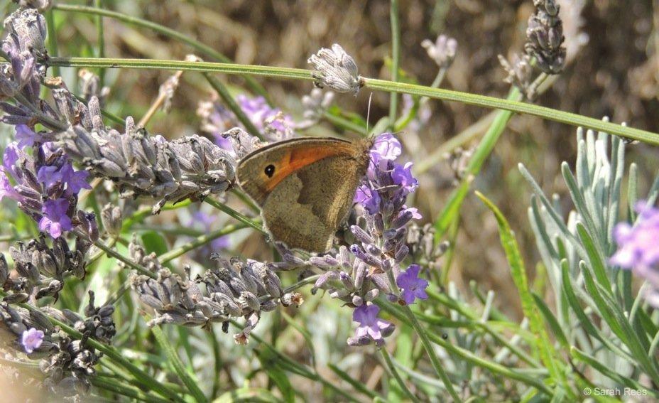Lavender-3_beautiful-britain A Lavender Escape