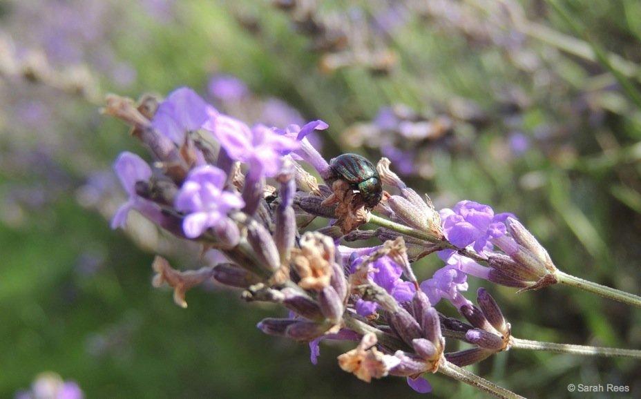 A Lavender Escape