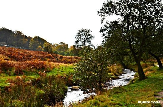 A Tranquil Walk on Hathersage Moor