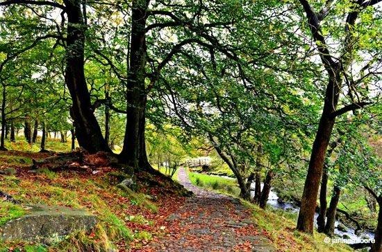 Longshaw-woodland A Tranquil Walk on Hathersage Moor