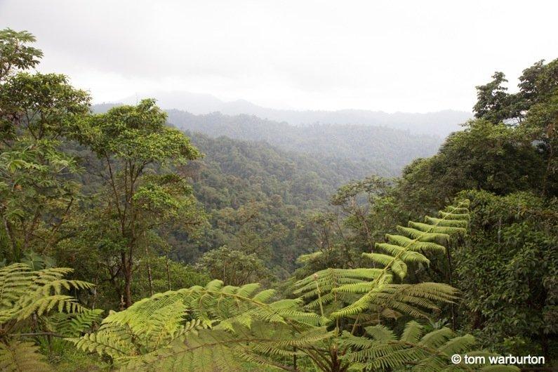 Mashpi Part 1-1- Ecuador