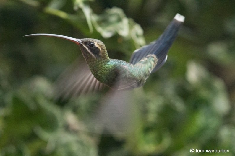 Mashpi-Part-1-5-Ecuador Ecuador – Mashpi Biodiversity Reserve