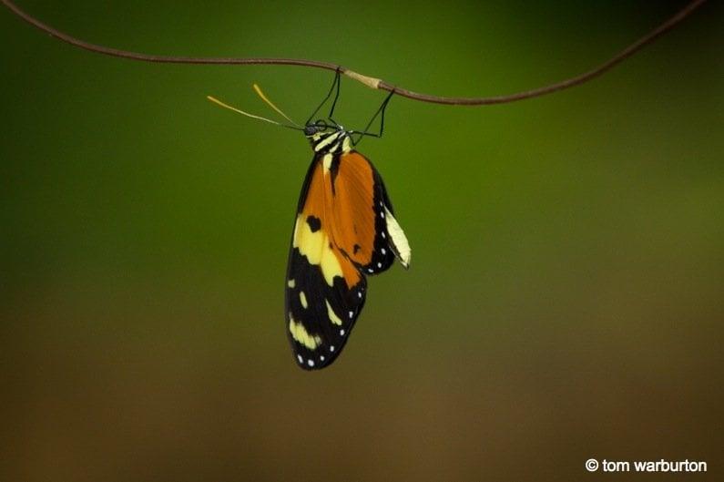 Mashpi-Part-1-6-Ecuador Ecuador – Mashpi Biodiversity Reserve