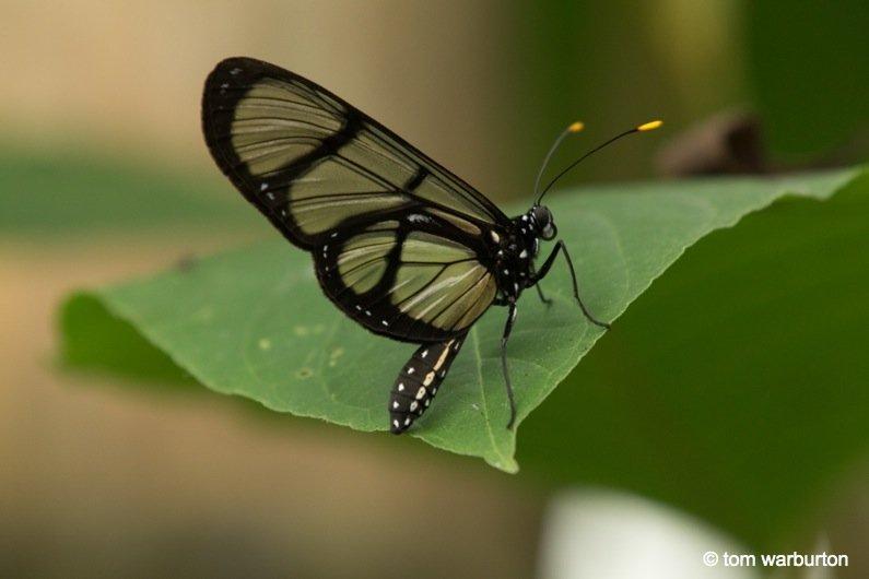 Mashpi-Part-1-7-Ecuador Ecuador – Mashpi Biodiversity Reserve