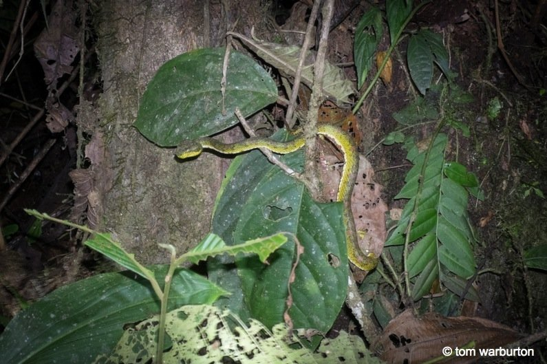 Mashpi-Part-1-8-Ecuador Ecuador – Mashpi Biodiversity Reserve