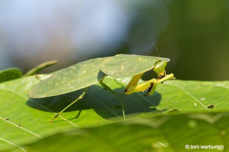 Mashpi-Part-1-9-Ecuador Ecuador – Mashpi Biodiversity Reserve