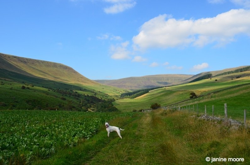 Max-Sugarbeet-and-Meadows-wales The Legend of the Welsh Black Mountains