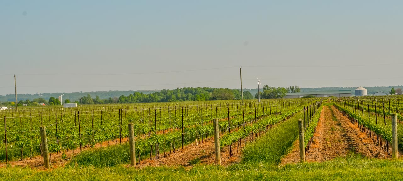 Miles-of-Vinyards Ice Wine Tasting – Lakeview Wine Co,  Niagara-on-the-lake, Canada