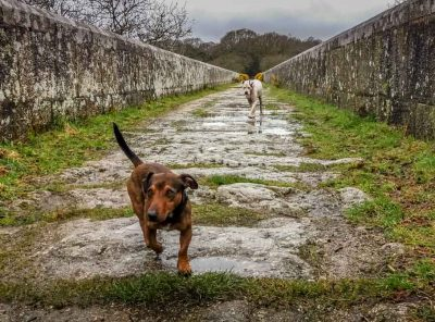 Luxulyan Valley Walk, Cornwall – Industrial Heritage and Natural Beauty