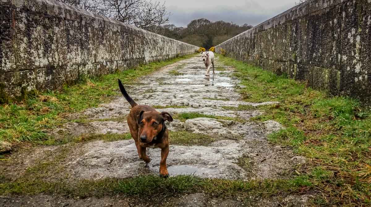 Luxulyan Valley Walk, Cornwall – Industrial Heritage and Natural Beauty 1