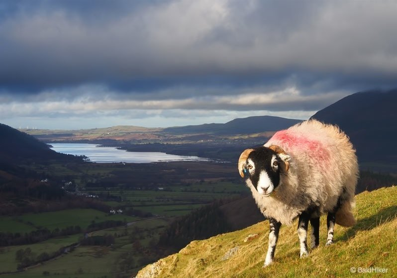 A walk up Catbells – a favourite of many