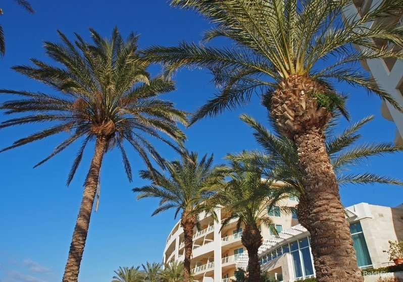 palm trees at malta resort