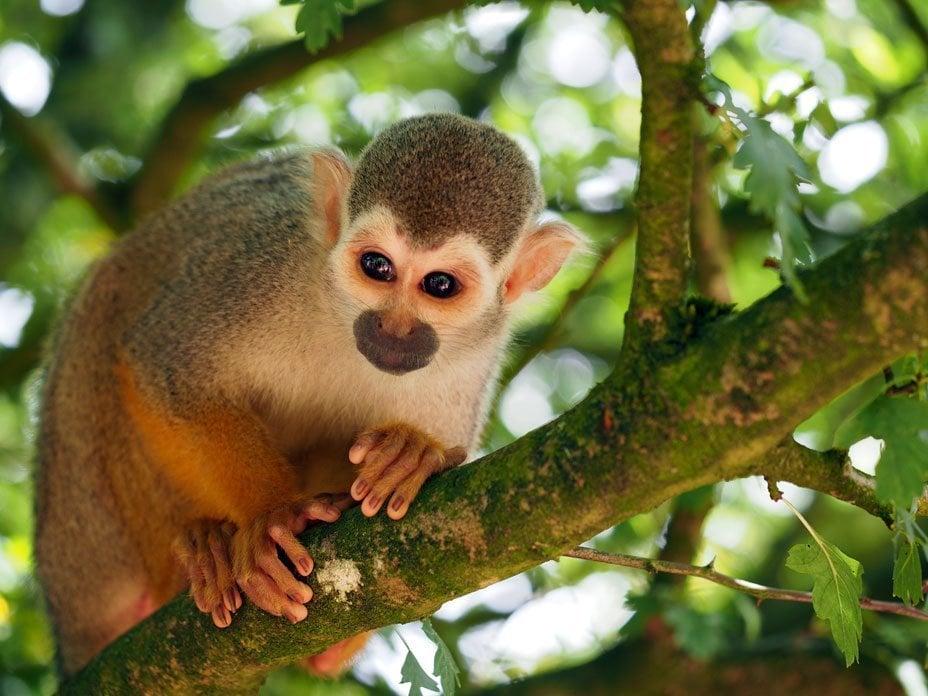 monkey with olympus OMD camera