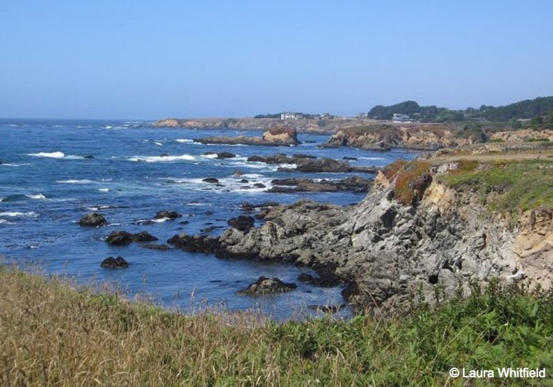 Photo-7 Majestic Mendocino