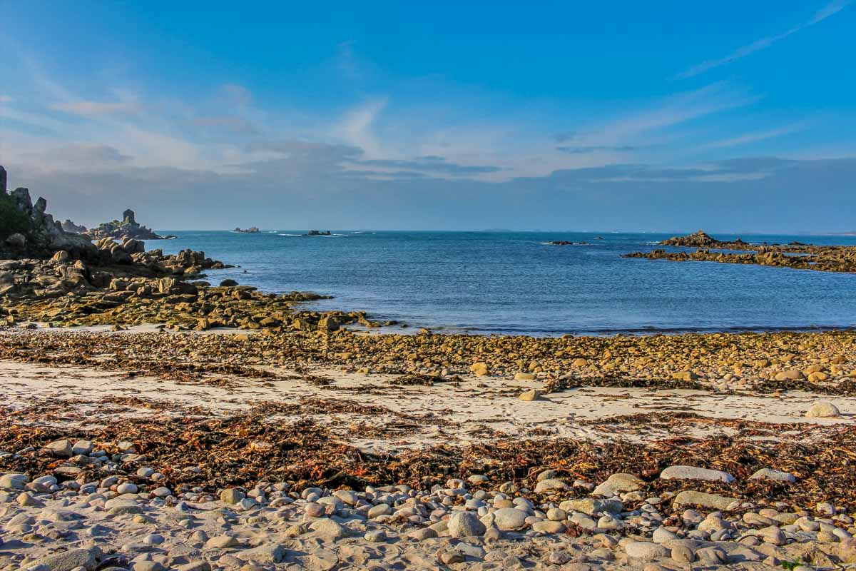 A Wild Food Walk on the Isles of Scilly
