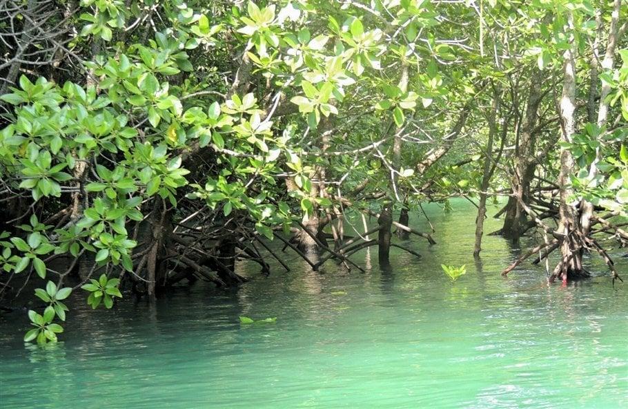Pic 7 Sarah Rees Hong Island mangrove- lagoon