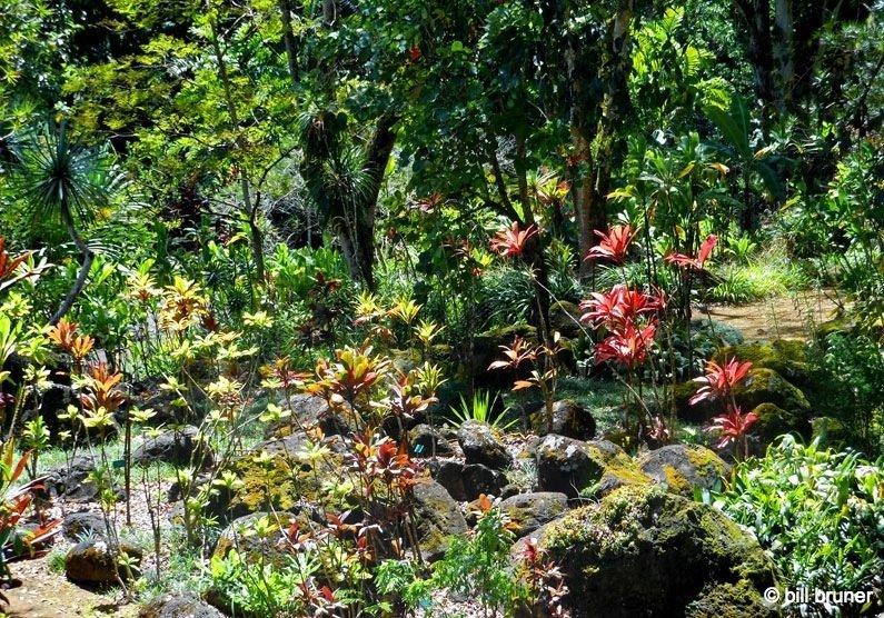 Waimea Valley Oahu, Hawaii Waimea Falls Trail