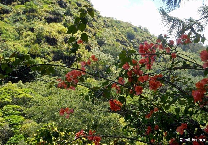 Picture-4-Waimea-Falls Waimea Valley Oahu, Hawaii Waimea Falls Trail