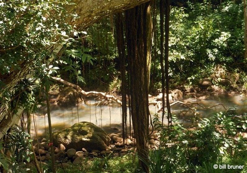 Picture-5-Waimea-Falls Waimea Valley Oahu, Hawaii Waimea Falls Trail