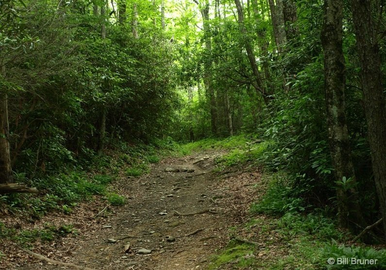 Great Smoky Mountains National Park: Anthony Creek Trail