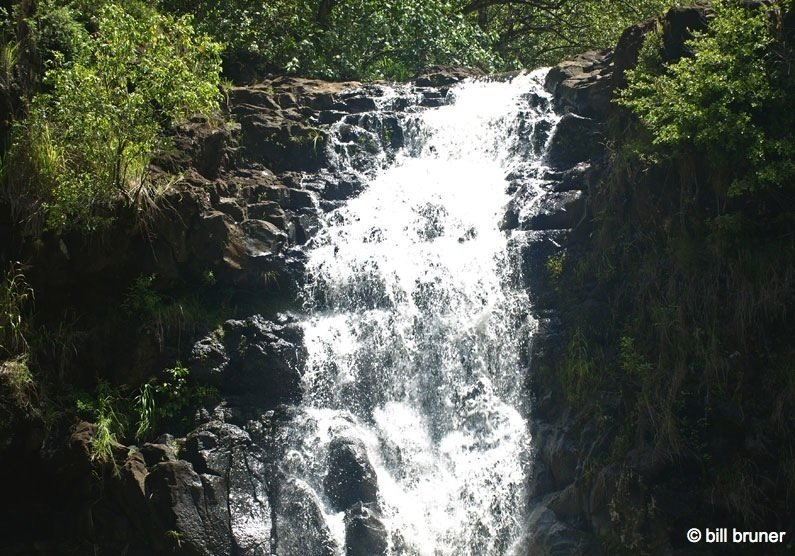 Picture-8-Waimea-Falls Waimea Valley Oahu, Hawaii Waimea Falls Trail