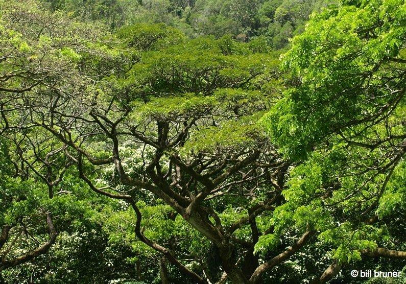 Picture-9-Waimea-Falls Waimea Valley Oahu, Hawaii Waimea Falls Trail