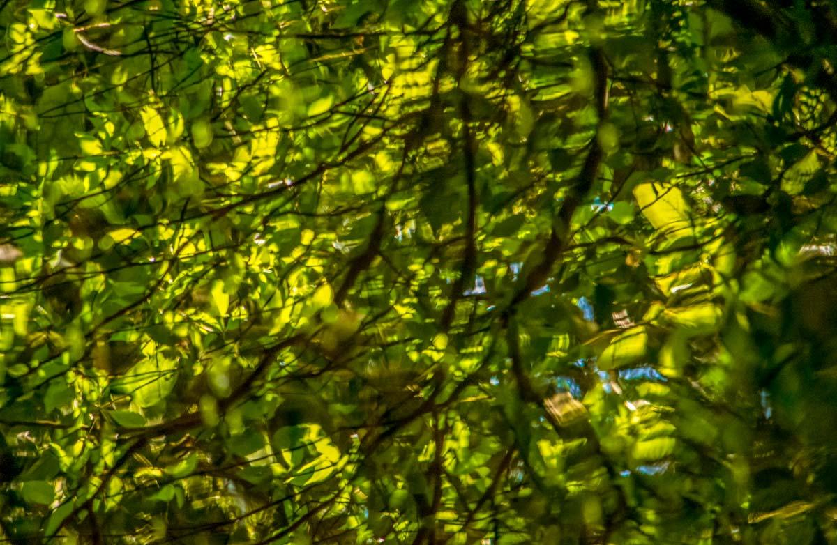Pukaha-Reflections-Lr-Edit Pukaha Mount Bruce: National Wildlife Centre, New Zealand