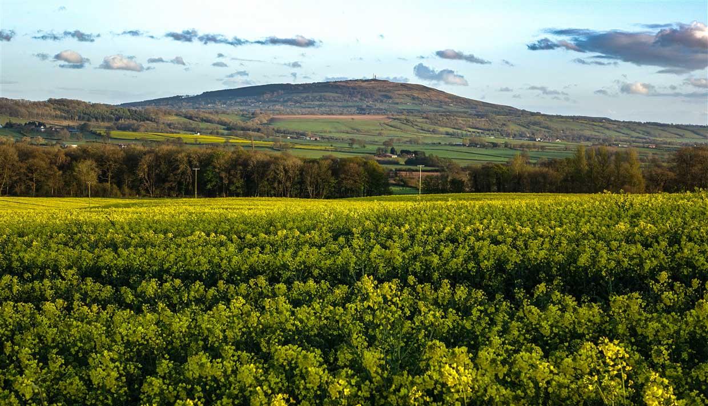 Rapeseed field in shropshire
